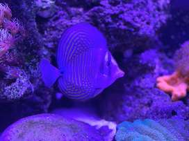 saltwater fish only