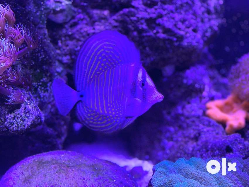 saltwater fish only 0