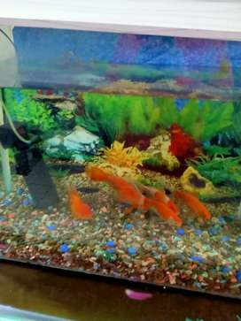 Fish aquarium with fishes and filter