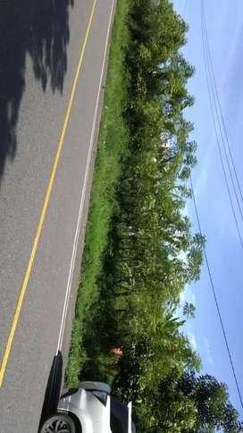 Di jual Tanah , lokasi Pinggir Jalan Banda Aceh Medan  km 84