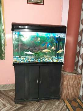 Want to sell my Big Sized Aquarium with stand