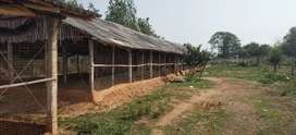 Farm Good Condition, for sell