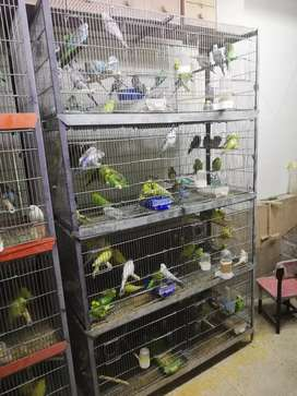 8 portion Cage