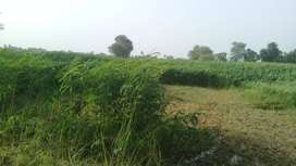 Agriculture Land  for Farming and Control shed etc.