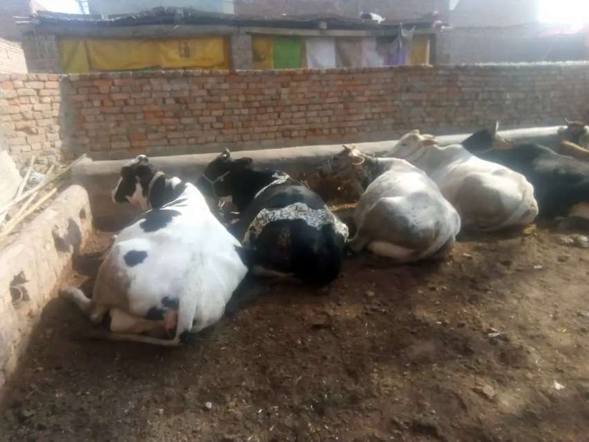 Running Dairy setup for sale 0
