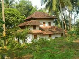 11cent fertile land with house for sale in heart of Cherupulassery.
