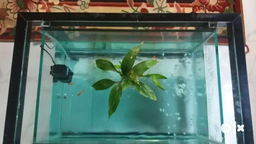 Tea table aquarim 0