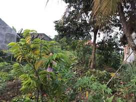 Dijual cepat tanah dengan luas 300 m tanpa perantara (bisa nego)