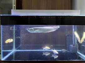 Dijual Aquarium 80 Cm & Arwana Silver Red 30 Cm