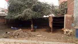 on road plot for sell At mulayam tiraha sa pahala, jankipuram lucknow