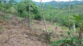 Tanah Sukajaya Jonggol Kp. Cisewu