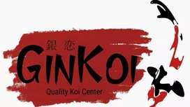 Lowongan Admin Toko & Online Koi