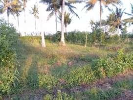 Tanah kavling luas murah bonus pohon kelapa