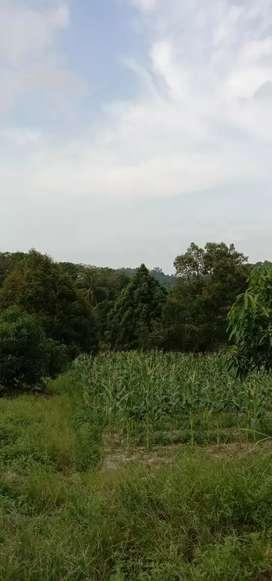 lahan perkebunan 2.5Ha