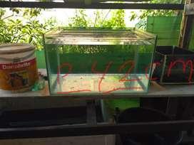 Aquarium  kaca bekas