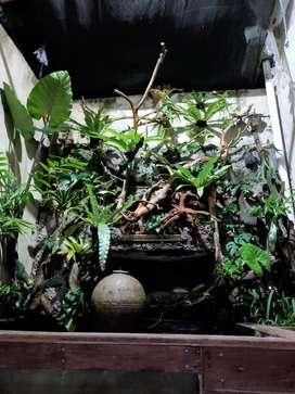 Jual pohon poladarium dll