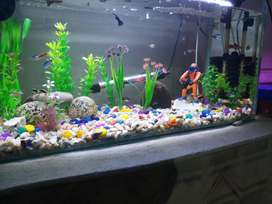 AQUARIUM WITH FISH AND ACESSORIES WITH ALL MAINTAINANCE GUIDELINES