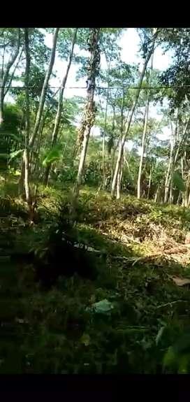 Jual kebun karawang net 50.000 per meter