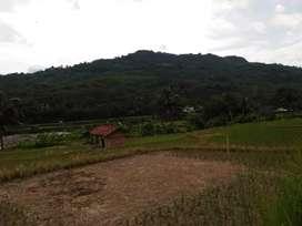 Jual cepat tanah untuk perkebunan, peternakan harga di bawah pasaran