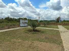 Kebun Kurma Samboja Kalimantan timur