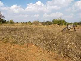 3 Acre Agriculture Farm Land near Thally To Denkanikottai Road