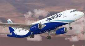 indigo Airlines Opened a many vacancy for freshers  nd experiences can