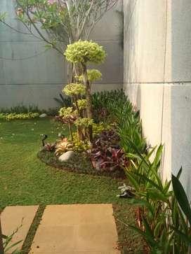 Bikin taman dan dekorasi taman jual rumput dan tanaman hias