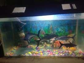 Top aquarium