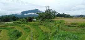 Jual tanah sawah produktif desa mengesta 59are 35jt/are