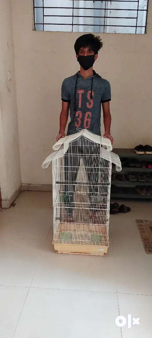 Cage for sale 0
