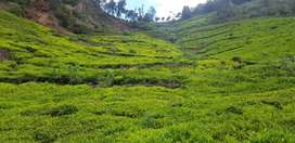 4.25 Acre Land for Sale at Ooty Thampatty