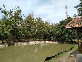 Dijual Tanah Cocok untuk Pemancingan