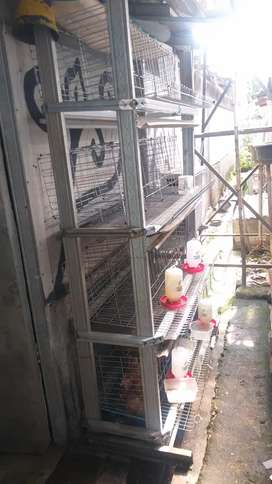 Dijual kandang ayam petelur,4 rak susun