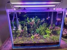 2ft 8mm Aquarium Glass tank for Sales