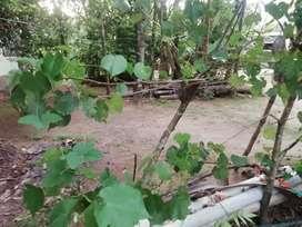 20 cent land rent near kims  hospital patadipalam rent 25000