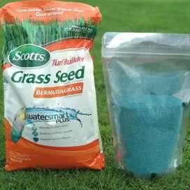 Benih bibit biji rumput lapangan sepakbola - rumput Bermuda