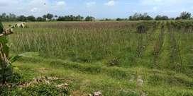 Jual tanah sangat murah lokasi wisata delod brawah negare jembrana