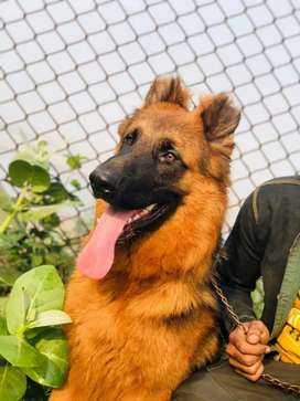 Long cord male or sale age 9 month