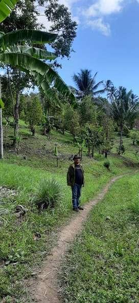 Kebun cengkeh produktif,Vanili ,di Manado, Kombi 5 hektar
