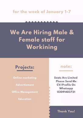 Looking male & Female staff For Working