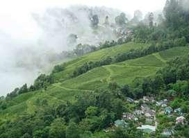 Darjeeling & Gangtok - Himalayan Beauty