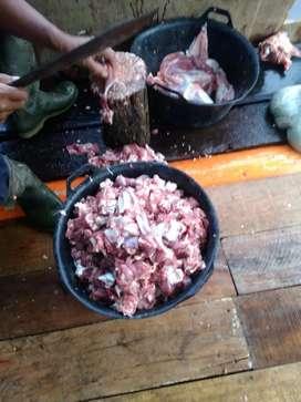 Jual daging kambing kiloan