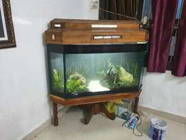 Planted aquarium making