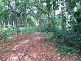 Residential land  325  cents  in Kakkanad.
