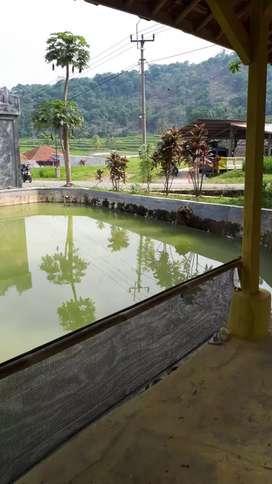 Kolam Ikan / Balong