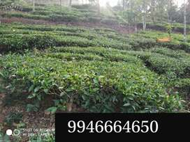 Residential with Agricultural land 7 acre near Vagamon Idukki for sail