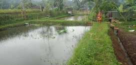 Tanah Kolam di Karanglewas Purwokerto