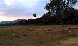 2 Acres Open Land Available For Rent/Lease in Nuzvid.
