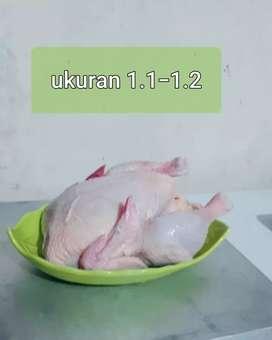 Ayam negri karkas 700-790