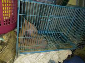 Cage for dog